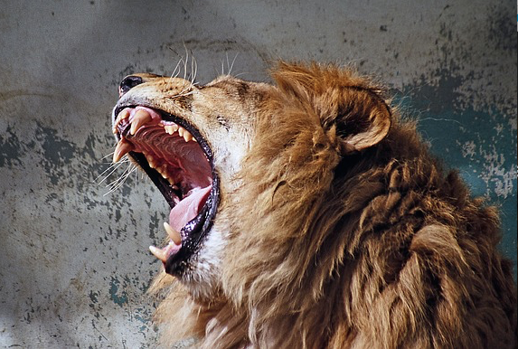 Is your content marketing roaring or yawning?