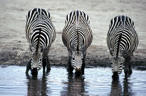 Does your content marketing have a watering hole feel?