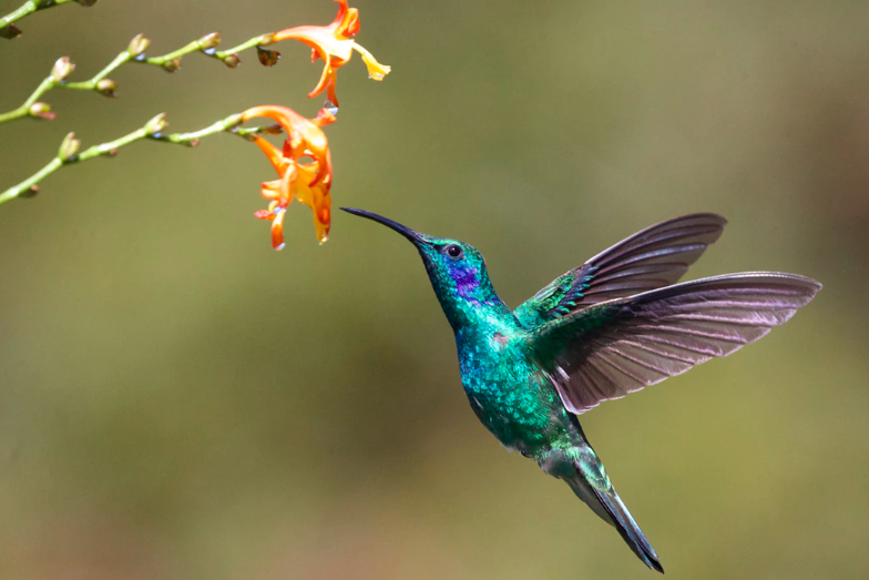 Landing pages: take some advice from nature to attract attention
