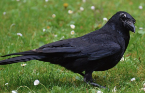 twitter has nothing to crow about