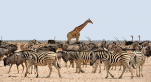 Is your content standing head and shoulders above your competitors?